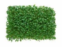 Fresh green cress. Close-up of fresh green delicate cress petals Stock Images