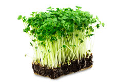 Fresh green cress salad on the white background Stock Photos