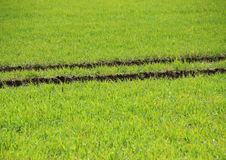 Fresh Green Crop Field with Tractor Trace Stock Photography