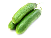 The fresh green cucumber Stock Image