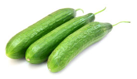 The fresh green cucumber Royalty Free Stock Photography
