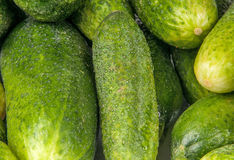 Fresh green cucumber. S are many Royalty Free Stock Image