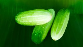 Fresh green cucumber on banana leaf royalty free stock images