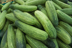 Fresh green cucumber. Close up a pile of fresh green cucumber in the market Royalty Free Stock Images