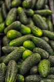 Fresh green cucumber Royalty Free Stock Photography