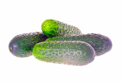 Fresh green cucumber isolated on white background Royalty Free Stock Images