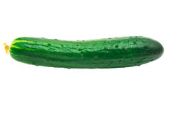 Fresh green cucumber isolated on white background.  Royalty Free Stock Photos