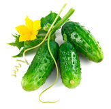 Fresh green cucumber with leaf and flower Royalty Free Stock Photos