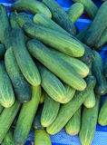 Fresh green cucumber. On market stock photography