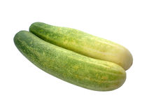 Fresh green cucumber Stock Photography