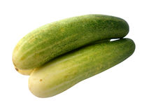 Fresh green cucumber Stock Images