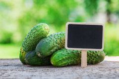 Fresh green cucumber on wood. Green background, copy space, black board Stock Photo
