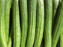 Fresh green cucumbers Stock Photo