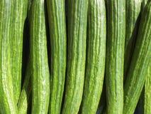 Fresh green cucumbers Stock Photo