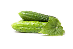 Fresh green cucumbers Royalty Free Stock Images