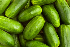 Fresh green cucumbers. As background Royalty Free Stock Image