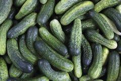 Fresh Green Cucumbers Stock Photography