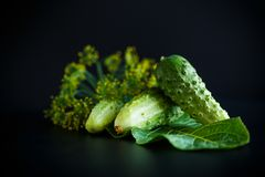 Fresh green cucumbers. On a black background Stock Image