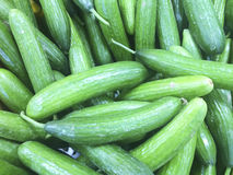 Fresh green cucumbers at farmers market Royalty Free Stock Photo