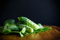 Fresh green cucumbers. On a wooden table Stock Photo