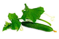 Fresh Green Cucumbers Isolated on White Background. Studio Photo Royalty Free Stock Images
