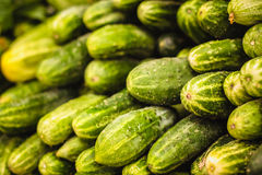 Fresh Green Cucumbers Royalty Free Stock Image