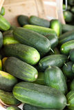 Fresh Green Cucumbers Stock Image