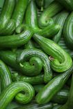 Fresh, green cucumbers on the weekly market. Can be used as background Stock Photo