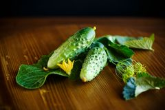 Fresh green cucumbers Stock Images