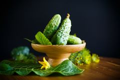 Fresh green cucumbers Stock Photography