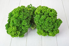 Fresh green curly parsley Stock Image