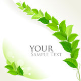 Fresh green decorative background Stock Photo