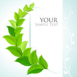 Fresh green decorative background Royalty Free Stock Images