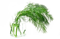 Fresh green dill. In vase isolated over white Stock Photography