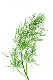 Fresh green dill. Branch of fresh green dill isolated over white Stock Images