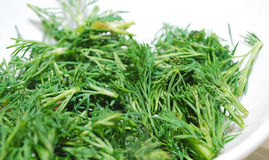 Fresh green dill Royalty Free Stock Photos
