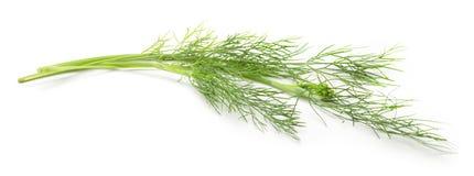 Fresh green dill Stock Photo