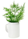 Fresh green dill bunch in small ceramic noggin Royalty Free Stock Photos