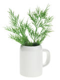 Fresh green dill bunch in small ceramic noggin Royalty Free Stock Image