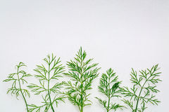 Fresh green dill herb on art canvas Royalty Free Stock Photography