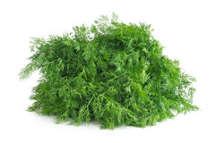 Fresh green dill isolated on white. Background Stock Photos