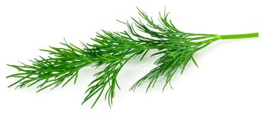 Fresh green dill isolated on white background. macro stock photography