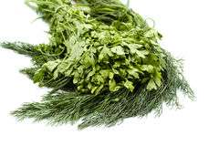 Fresh green Dill and Parsley of the garden Stock Images