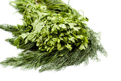 Fresh green Dill and Parsley of the garden Royalty Free Stock Photo