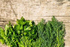 Fresh green dill and parsley herbs on rustic wooden table Stock Photos