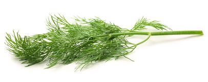 Fresh green dill Royalty Free Stock Images