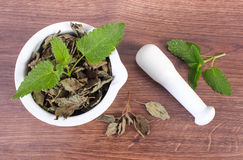 Fresh green and dried lemon balm with mortar, herbalism, alternative medicine Royalty Free Stock Images