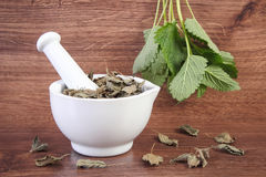 Fresh green and dried lemon balm in mortar, herbalism, alternative medicine Royalty Free Stock Images