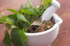Fresh green and dried lemon balm in mortar, herbalism, alternative medicine Royalty Free Stock Photo