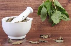 Fresh green and dried lemon balm in mortar, herbalism, alternative medicine Stock Photo
